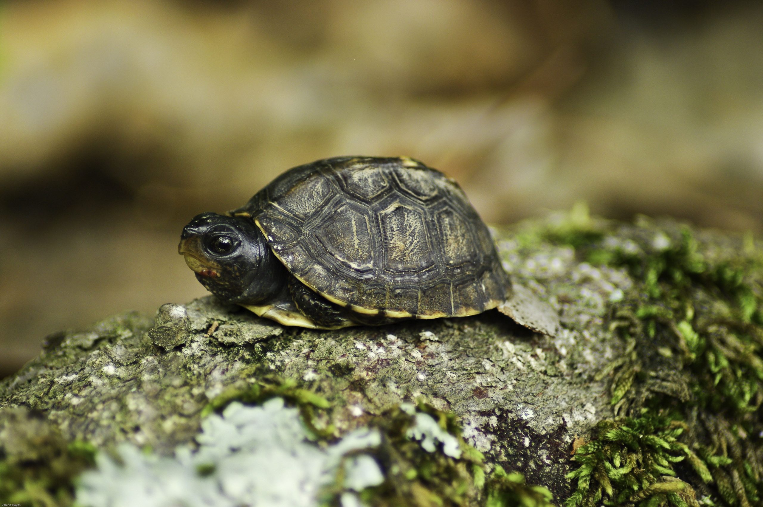 The Solitary Best Technique To Make Use Of For Turtle