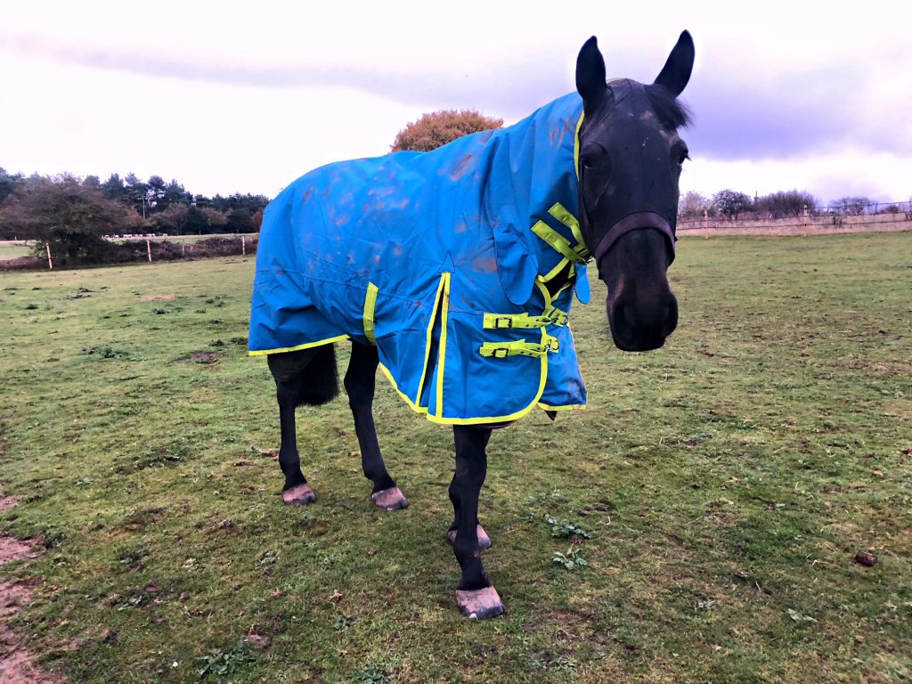 Horse Providers – Get Prepared For Winters